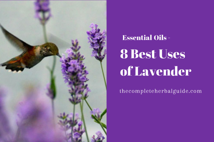 8 Best Uses of Lavender