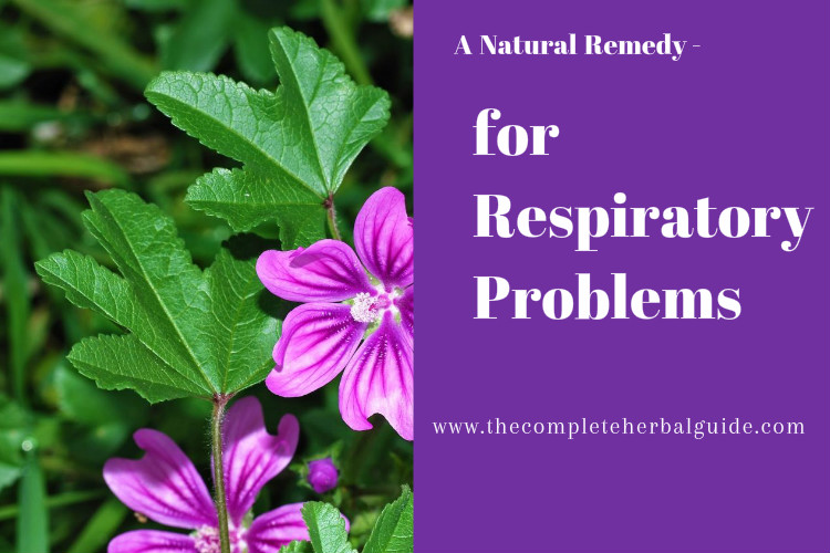 A Natural Remedy for Respiratory Problems