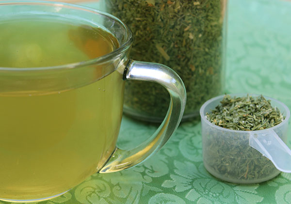 Alfalfa-Tea