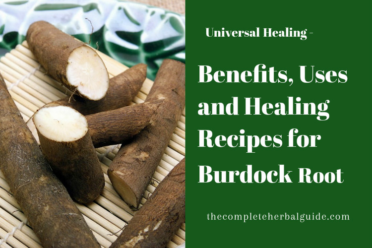 Benefits, Uses and Healing Recipes for Burdock Root