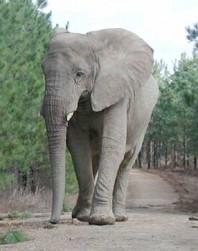 Flora. Courtesy of elephants.com