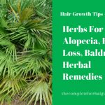 Herbs For Alopecia, Hair Loss, Baldness Herbal Remedies