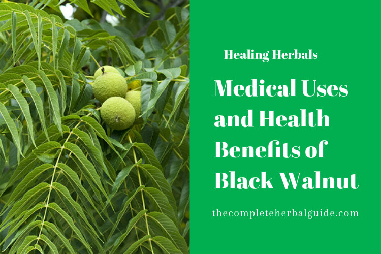 Medical Uses and Health Benefits of Black Walnut