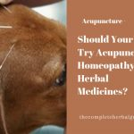 Should Your Pet Try Acupuncture, Homeopathy, Or Herbal Medicines?