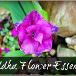 Siddha-Flower-Essences