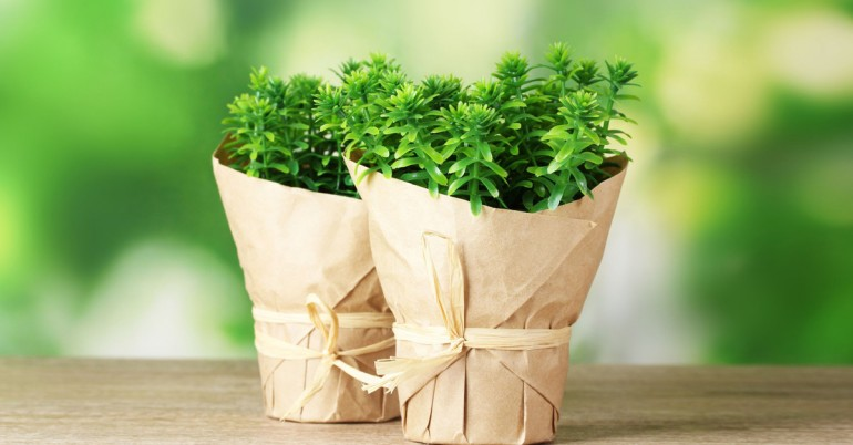 Thyme-A-Herbal-Treatment-To-Many-Ills-770x402