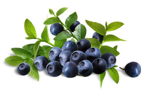 bilberry2