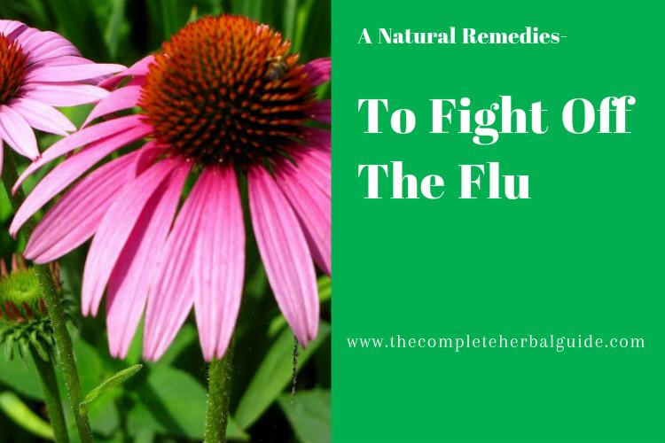 flu banner2