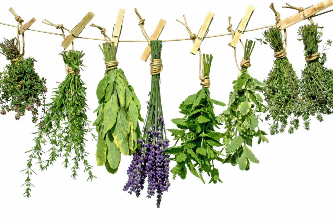 herbs-3.jpg