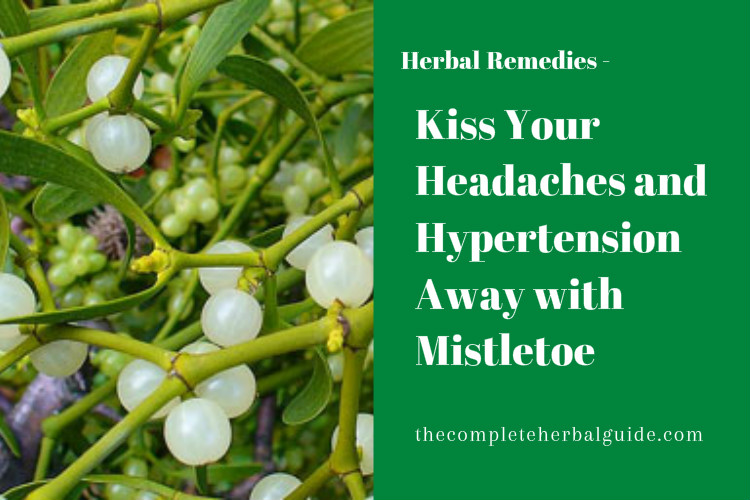 Kiss Your Headaches and Hypertension Away with Mistletoe