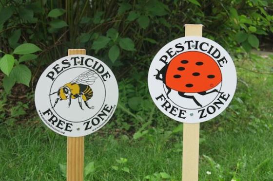 pesticide-free garden