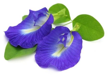 purple flower 4