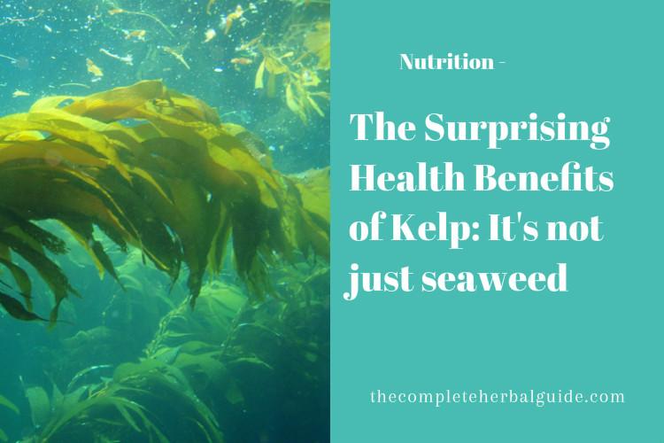The Surprising Health Benefits of Kelp: It's not just seaweed