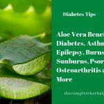 Aloe Vera Benefits: Diabetes, Asthma, Epilepsy, Burns, Sunburns, Psoriasis, Osteoarthritis and More