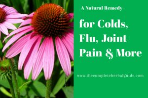 Echinacea for Colds, Flu, joint Pain & More