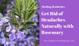 Get Rid of Headaches Naturally with Rosemary