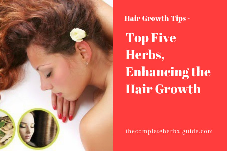 Top Five Herbs, Enhancing the Hair Growth