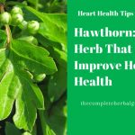 Hawthorn: The Herb That Can Improve Heart Health