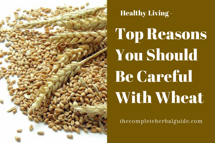 Top Reasons You Should Be Careful With Wheat