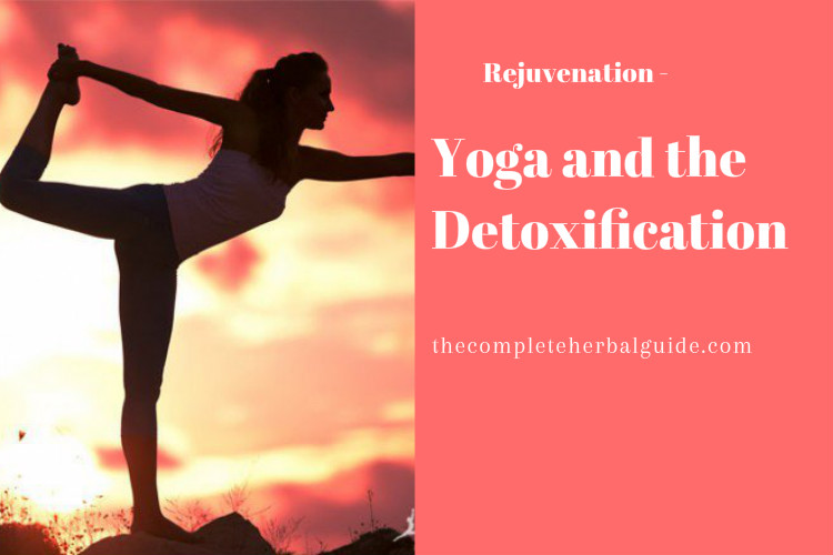 Yoga and the Detoxification