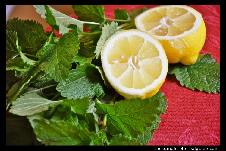 lemon balm mask
