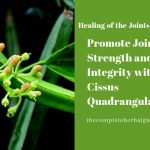 Promote Joint Strength and Integrity with Cissus Quadrangularis