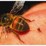 bee-control_04-300x231
