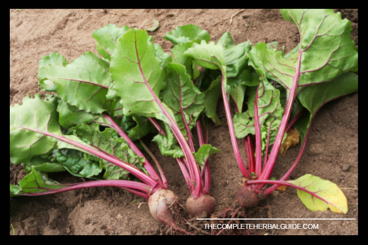 beetroot-leaves (1)