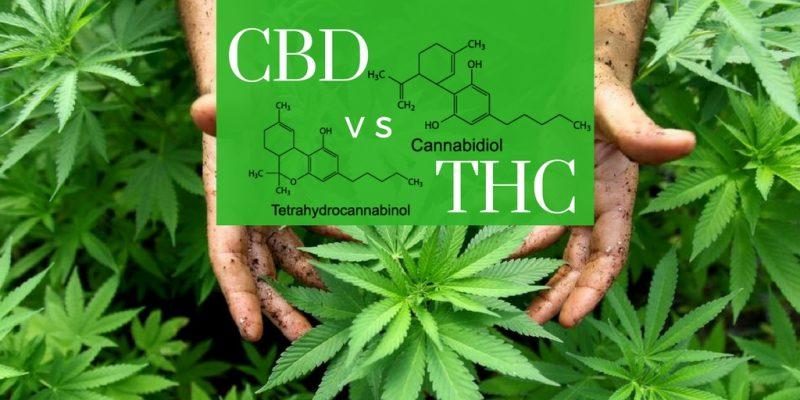CBD-vs-THC