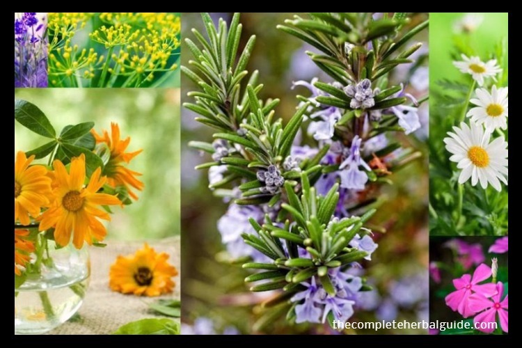 Powerful Herbal Remedies Right Out Of Your Garden