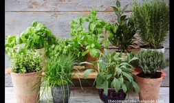 The Guide to Growing Herbs at Home