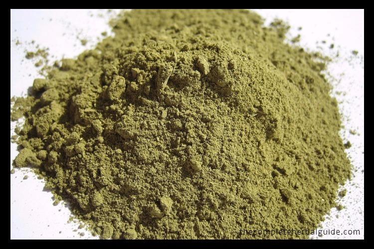 Henna (Lawsonia inermis L.