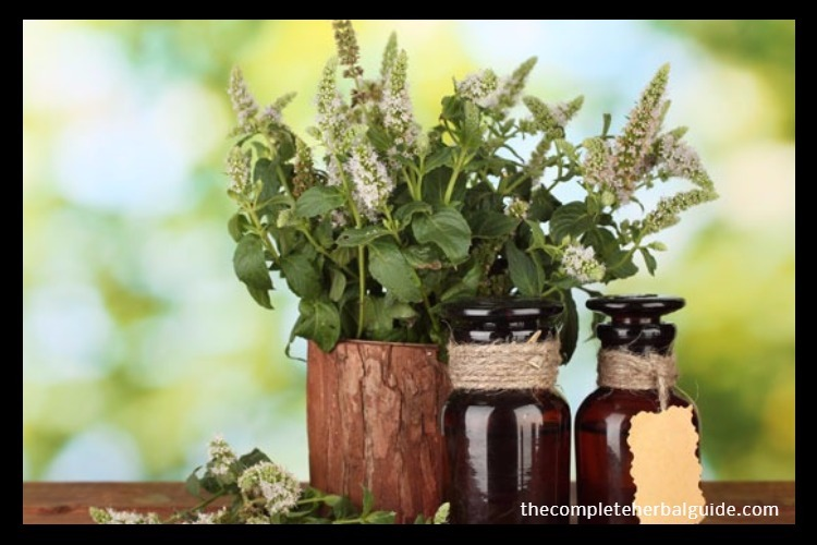 Herb-Medicines-2