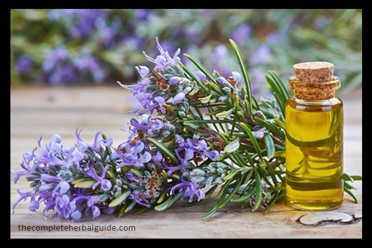 Rosemary-Essential-Oil-Uses (1)