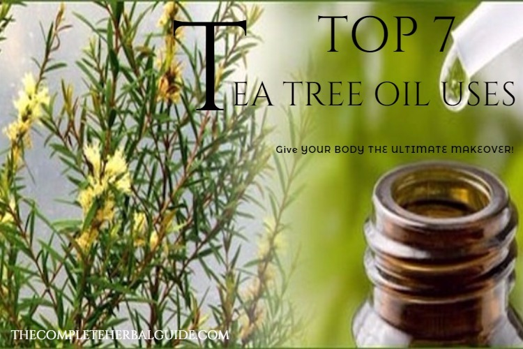Top 7 Tea Tree Oil Uses