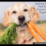 Eating Plan for Pet Dogs - Choosing the Right One
