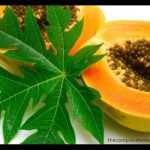 what is proper dosage of papaya leaf liquid extract