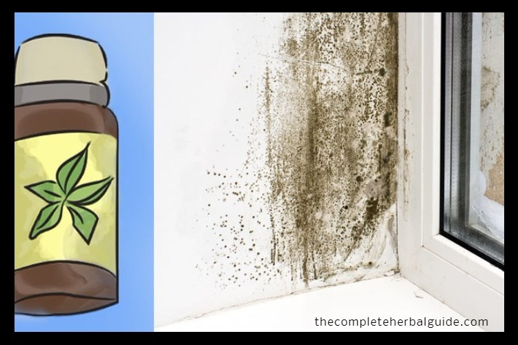 Tea Tree Oil Kills Mold