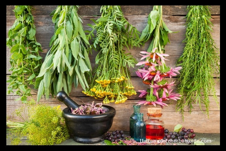 """There are several recovery treatments that one can use to help recover after a car accident, but one of the safest and cheapest alternatives is herbal treatment. Herbal medicine has been used since the dawn of time to heal injuries. Before synthetic drugs came along, people depended on herbal medicine to treat their injuries and ailments. The effectiveness of herbal treatment has been subject to debate over the centuries. However, many people still seek natural alternatives in order to heal their injuries. However, can herbal treatments help in your car accident recovery? Read further to learn more. What Are Herbal Medicines? Herbal medicines are those medicines composed of ingredients extracted from naturally occurring plants. These medicines are usually a mix of several nutrients extracted from various plants used to target illnesses and bodily pains. The use of herbal medicine existed long before the term """"herbal treatment"""" was coined. In fact, various ways of incorporating herbs have been developed by cultures all over the globe to treat illnesses. Advantages of Herbal Medicine Herbal medicine is one of the most natural alternatives that you can choose to help in your recovery from a car accident. Here are some advantages of herbal treatment: 1. Cost-Efficient – If you are looking for an alternative from all the expensive synthetic drugs available on the market, herbal medicine could work for you. Most herbs used to treat ailments of the body can be found in local retail stores or even in your kitchen. 2. Safe – Herbal medicines are less likely to cause side effects to your body than synthetic drugs. Herbal medicines are made from natural ingredients that cause little to no harm to the body and only help your body recover. 3. Accessible – Many synthetic drugs are inaccessible to common people. This leads to ordering these drugs online and doubting the authenticity of the products you receive. Herbal medicines, however, are easily accessible in your local retail """