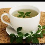 Jiaogulan tea