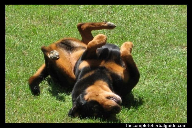 dog epilepsy