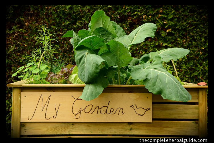 How To Make An Indoor Kitchen Herb Garden And What To Grow