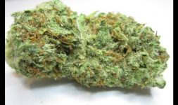 Sugarkush CBD