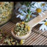 Image source: Adobe Stock royalty-free image #67436608, 'Dried Camomile' uploaded by cosma, standard license purchased from https://stock.adobe.com/images/download/67436608; file retrieved on July 29th, 2019. License details available at https://stock.adobe.com/license-terms - image is licensed under the Adobe Stock Standard License