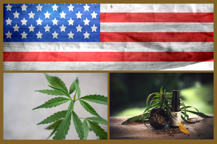 Reason Why America is Obsessed with Using CBD Oils