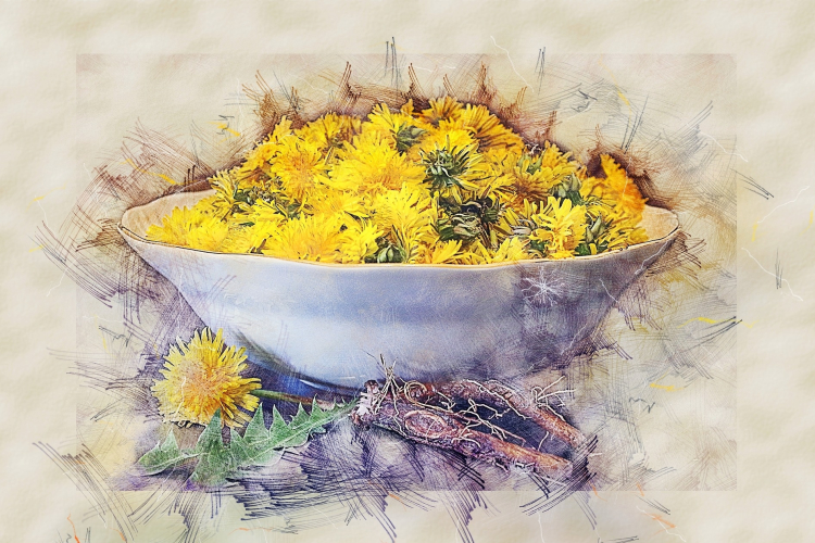 Dandelion Root for weight gain