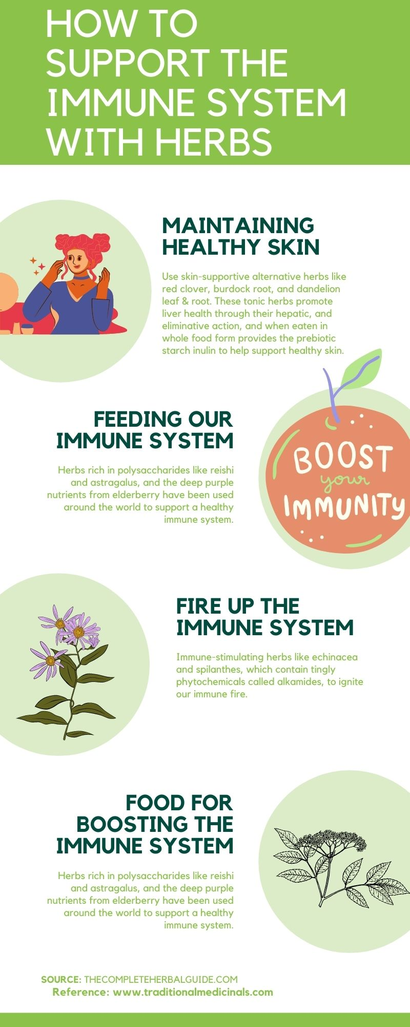 How to Support the Immune System with Herbs