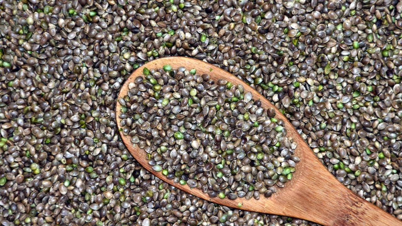 medical marijuana quality seeds